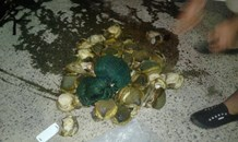 Police seize Abalone worth R225 000-00 after vehicle search