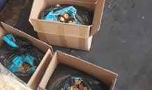 Western Cape police gave the seemingly lucrative trade of abalone a huge blow