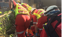 Man critical after being trapped under large tree in Sarnia in Pinetown