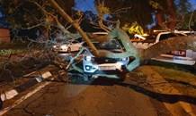 Gauteng: Woman injured after tree falls on car
