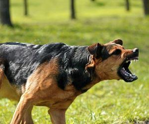 Dog attack leaves two men injured in Mineralia, Middelburg