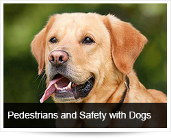Pedestrians and Safety with Dogs