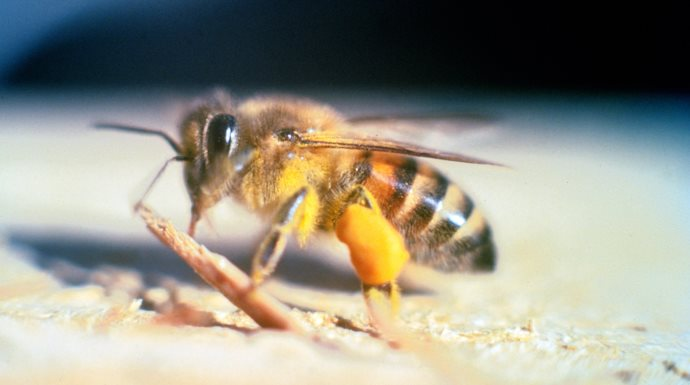 What to do when stung by bees