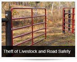 Theft of Livestock and Road Safety