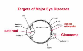 Eye diseases any eye diseases or conditions that affect your vision will in turn affect your ability to drive safely some of the leading causes of vision impairment in ccuart Choice Image