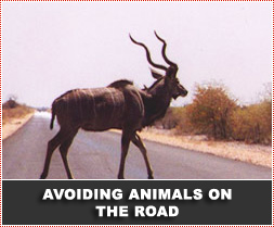 Road Safety and Avoiding Animals on the Road