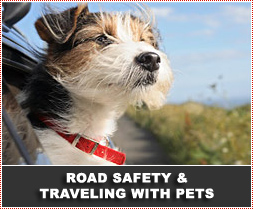 Road Safety and Traveling with Pets