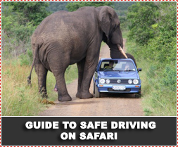 Guide to safe driving on safari / driving in the nature reserve